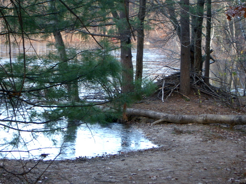 Beaver Lodge on Hutchins Pond